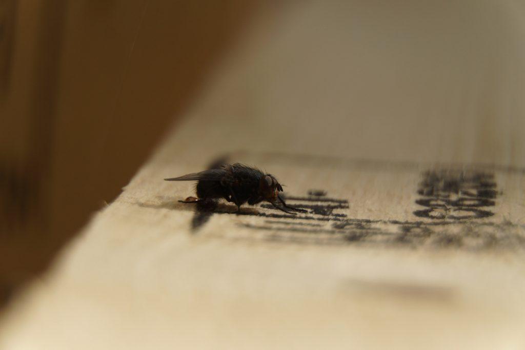 Fliege, Makro, Fotografie, Insekt, Sony, E-Mount, Zwischenring